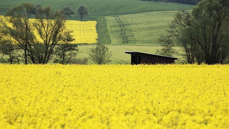 Betekenis van geel