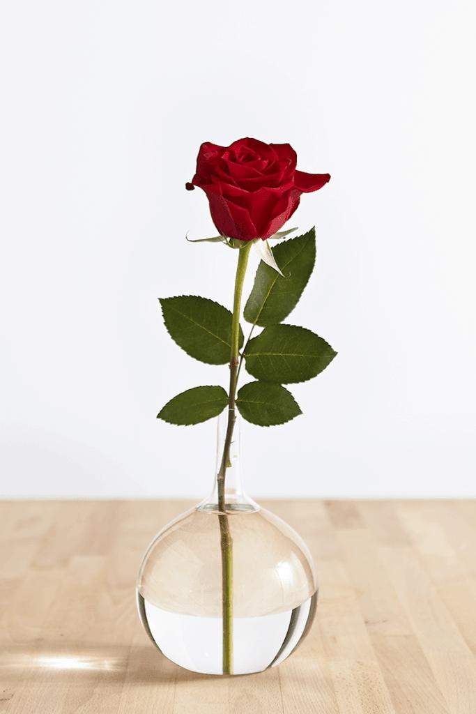 Rosa roja en un jarrón