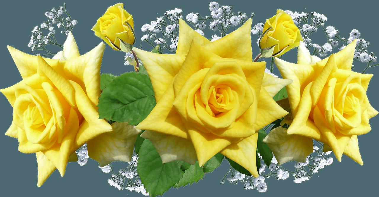 Rosas amarillas en circulo
