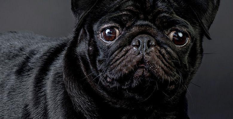 Perro pequeño de color negro