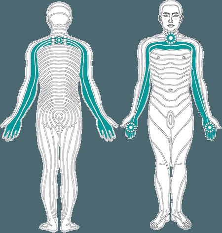 Órganos vitales y funciones asociadas a la turquesa.