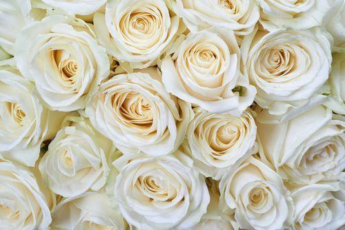 Un ramo de rosas  de color blanco marfil